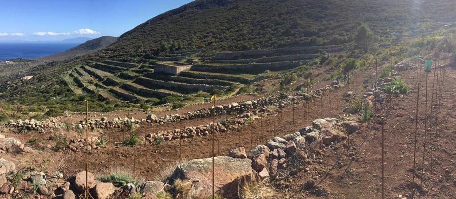 Antichi terrazzamenti Isola di Capraia